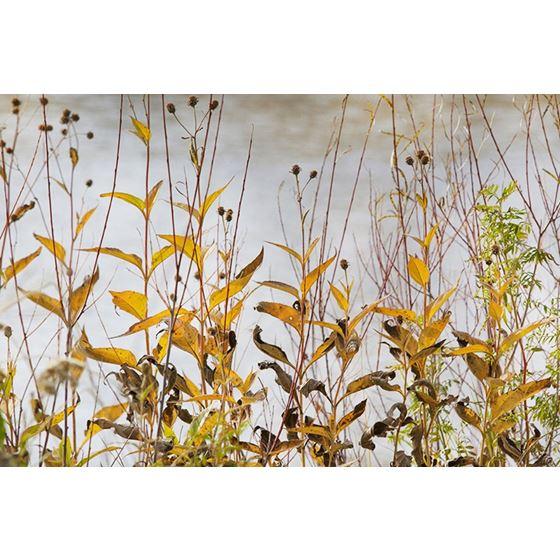 Koroseal Grasses 10 Grasses 10 Original Image 5870