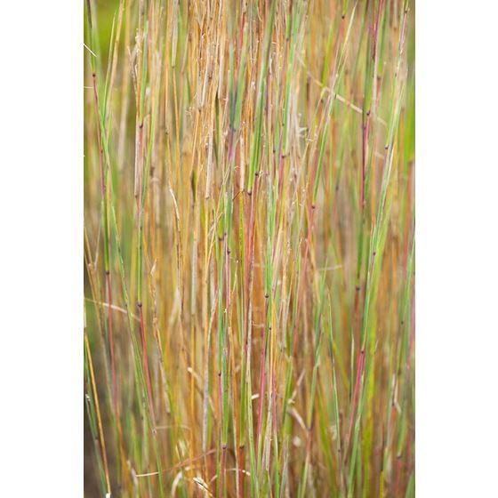 Koroseal Grasses 1 Grasses 1 Original Image 0143