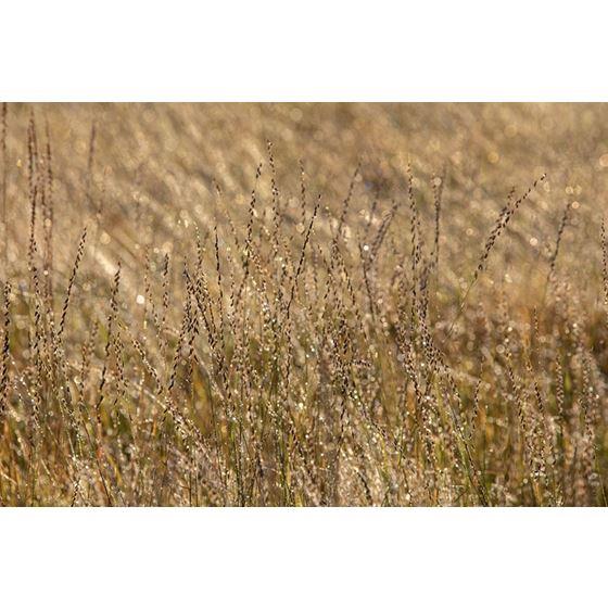 Koroseal Grasses 15 Grasses 15 Original Image 9591