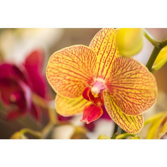 Flowers 10 Flowers 10 Original Image 0511 Type II