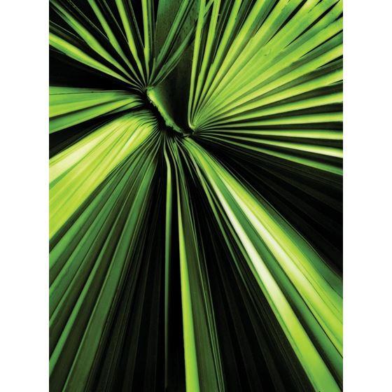 Fan Palm Fan Palm Original Image KG101-05 Type II
