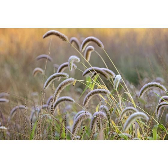 Koroseal Grasses 14 Grasses 14 Original Image 9377