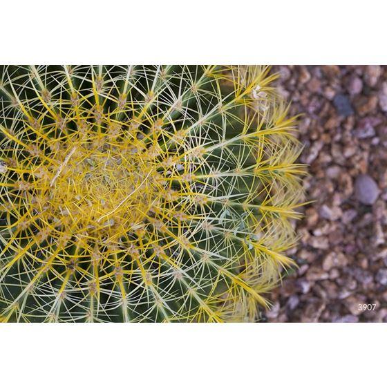 Grasses-Leaves 3 Grasses-Leaves 3 Original Image 3907-2 Type II